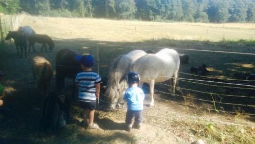 Remstecken Pferde Koblenz KindinKoblenz