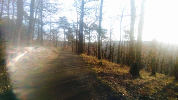 Wald Koblenz Remstecken KindinKoblenz