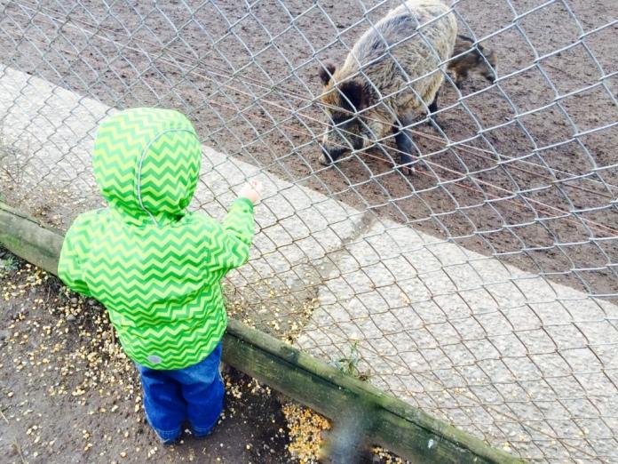 Wildschwein Koblenz Remstecken KindinKoblenz
