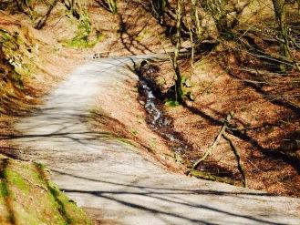 Waldweg Wild- und Freizeitpark Gackenbach Westerwald