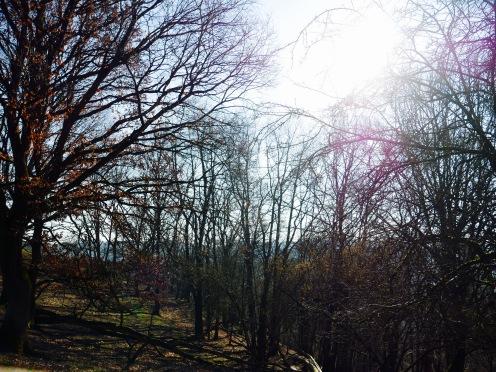 Wald Westerwald Wild- und Freizeitpark Westerwald