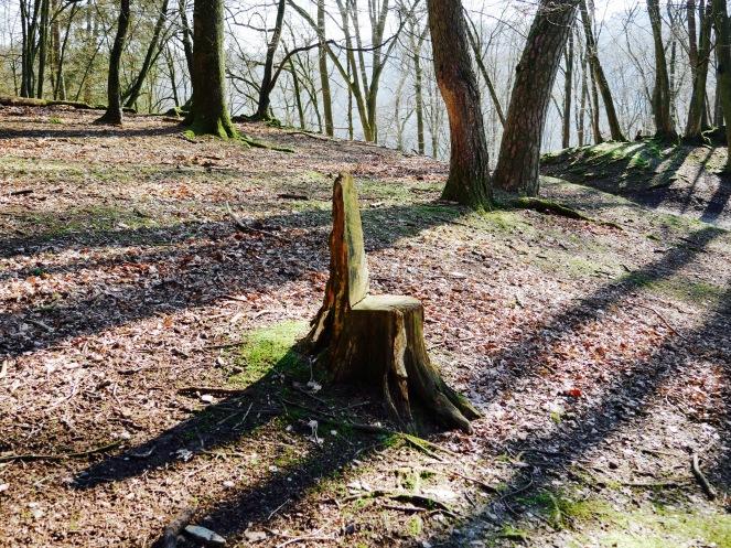 Wildpark Gackenbach Wald Stuhl