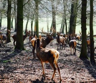 Hirsch Rehe Wildpark Westerwald