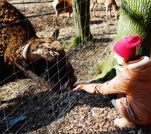 Büffel Wisente Wild- und Freizeitpark Gackenbach