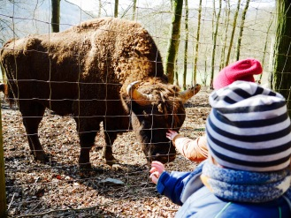 Wildpark Gackenbach Wisente Büffel