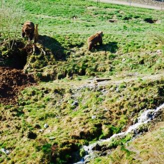 Braunbären Wildpark Westerwald