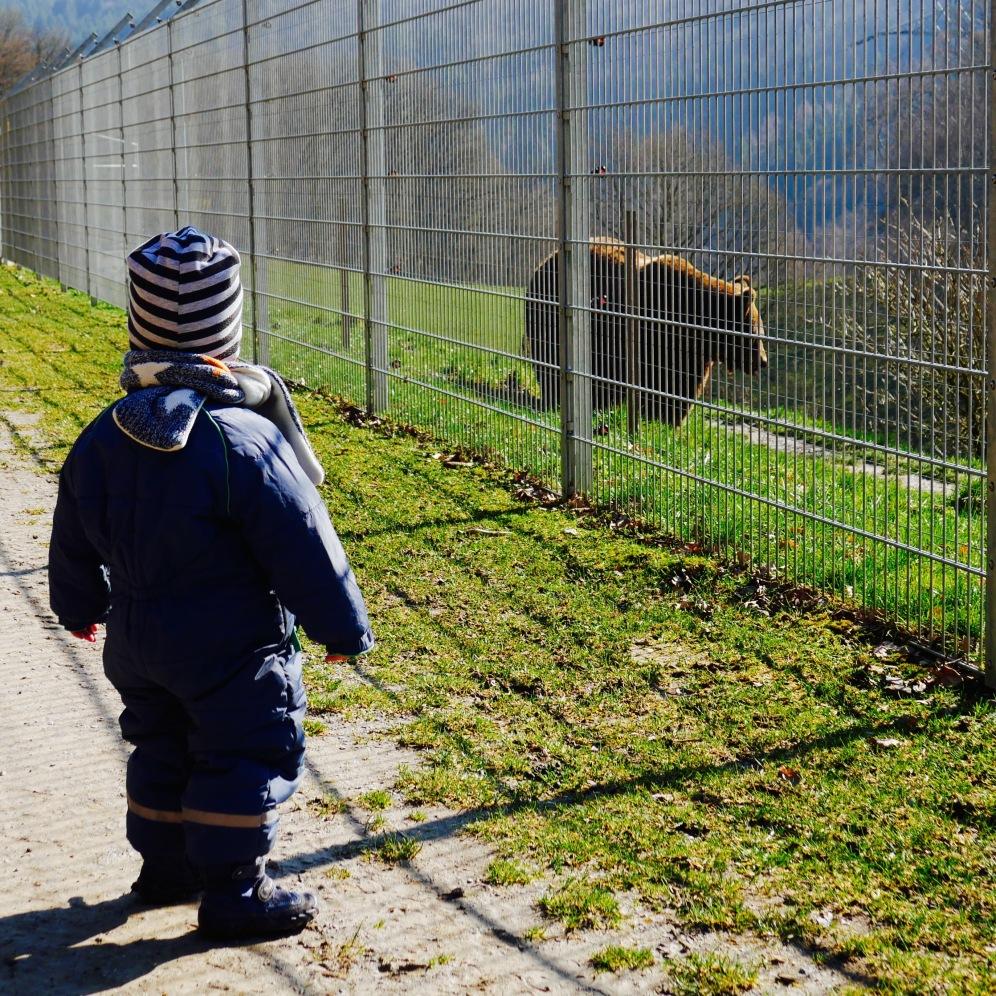 Bär Wild- und Freizeitpark Gackenbach Braunbär