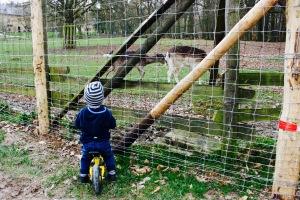 Niederwald Jagdschloss Wildpark