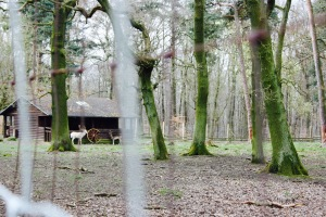 Niederwald Wildpark Jagdschloss
