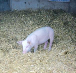 Bauernhof Frücht Kobenz Biohof